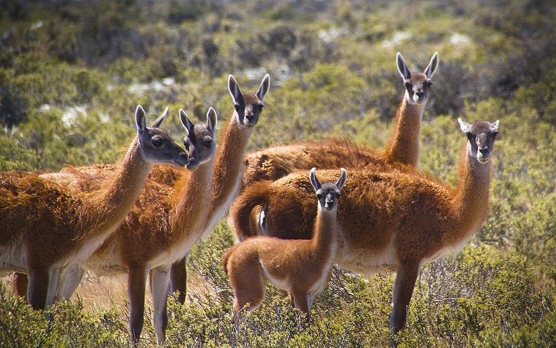 Bolivia Animals Where In Our World